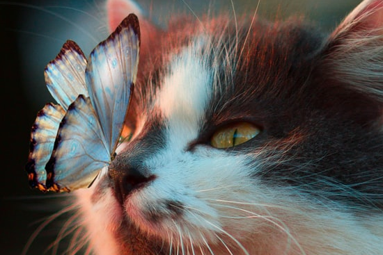 Butterfly-cat-distraction