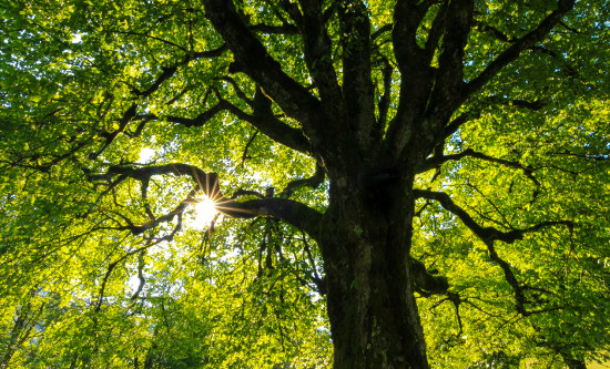Sunlight in Tree - How do you want healthcare to feel?