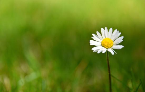 daisy-hope